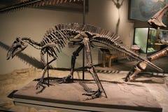 Dinosaurier arkivbild