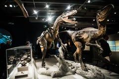 Dinosaurier arkivbilder