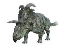 Dinosaurier Albertaceratops der Wiedergabe-3D auf Weiß Lizenzfreie Stockfotografie
