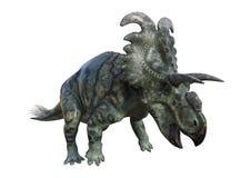 Dinosaurier Albertaceratops der Wiedergabe-3D auf Weiß Stockbilder