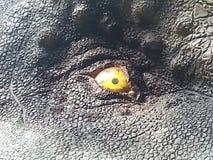 Dinosaurier - Auge stockfotos