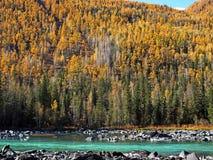 Dinosaurier-Bucht Kanas See im Herbst Stockfoto