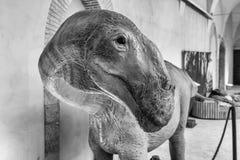 Dinosaurier gekennzeichnet in einer Ausstellung gehalten in Gubbio, Italien stockfotografie