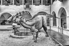 Dinosaurier gekennzeichnet in einer Ausstellung gehalten in Gubbio, Italien stockfoto