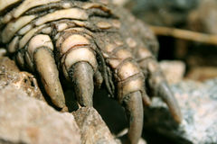 Dinosaurier-Greifer Lizenzfreies Stockbild