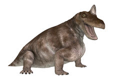Dinosaurier Keratocephalus Stockfotografie