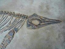 Dinosaurier-Kopf, Körper und Bein-Fossil Stockfotos