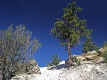 Dinosaurier Ridge Kolorado Stockbild
