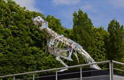Dinosaurier-Skelett in Paris auf der Seine Lizenzfreie Stockbilder