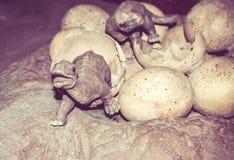Dinosaurier und Eier lizenzfreie stockfotos