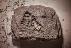 Dinosaurierfossilien, Juraära, paläontologische Aushöhlungen lizenzfreie stockbilder