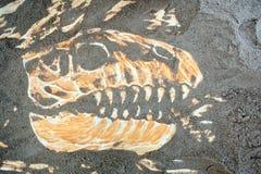 Dinosaurierschädelknochen Stockbild