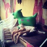 Dinosaurierspielzeug und -kätzchen Lizenzfreie Stockfotos