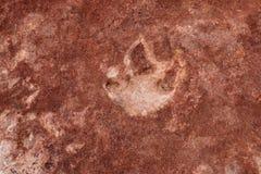 Dinosauriespår i norr prärievargButtes Royaltyfri Foto