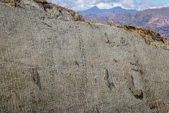 Dinosauriespår på Cal Orcko Wall - Sucre, Bolivia Royaltyfria Bilder