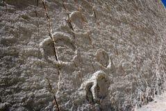 Dinosauriespår på Cal Orcko Wall - Sucre, Bolivia Arkivbilder