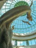 Dinosaurieutställning i norr Carolina Museum av naturvetenskaper arkivfoto