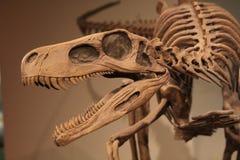 Dinosaurio Imagen de archivo