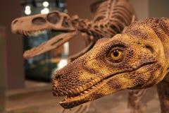 Dinosaurio Imágenes de archivo libres de regalías