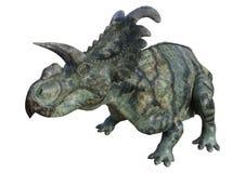 dinosaurio Albertaceratops de la representación 3D en blanco Imagenes de archivo
