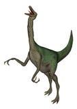 Dinosaurio de Gallimimus que ruge - 3D rinden Fotografía de archivo libre de regalías