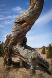 Dinosaurio de madera Foto de archivo libre de regalías