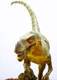 Dinosaurio de Ornitholestes en blanco Fotos de archivo
