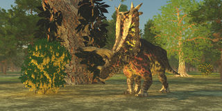 Dinosaurio de Pentaceratops Foto de archivo libre de regalías
