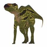 Dinosaurio de Shantungosaurus en blanco Fotos de archivo libres de regalías