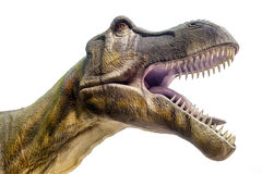 Dinosaurio de T-rex Foto de archivo libre de regalías