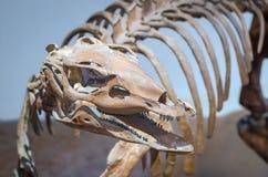 Dinosaurio del Thescelosaurus Imagen de archivo