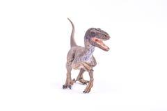 Dinosaurio del Velociraptor Imágenes de archivo libres de regalías