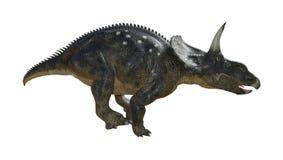 dinosaurio Diceratops de la representación 3D en blanco Foto de archivo libre de regalías