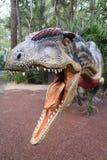 Dinosaurio fragilis del Allosaurus foto de archivo libre de regalías