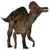 Dinosaurio Pato-cargado en cuenta Corythosaurus Fotografía de archivo