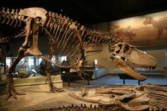Dinosaurios foto de archivo libre de regalías