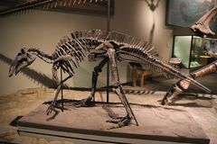 Dinosaurios fotografía de archivo
