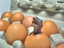 Dinosauro che cova da un uovo fotografia stock