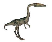 Dinosauro di coelophysis - 3D rendono Fotografie Stock