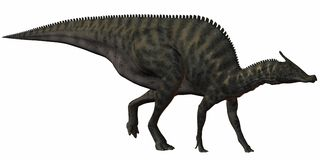 Dinosauro di Saurolophus Angustirostris-3D Immagine Stock