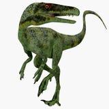 Dinosauro giurassico di Juravenator Immagine Stock
