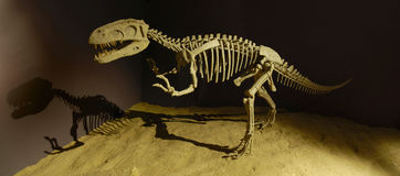 Dinosauro nel museo Fotografie Stock