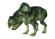 dinosauro Protoceratops della rappresentazione 3D su bianco Immagini Stock