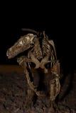 Dinosauro ricostruito Fotografie Stock