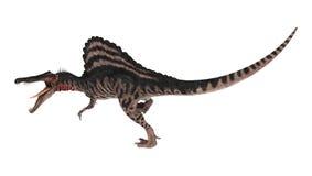 dinosauro Spinosaurus della rappresentazione 3D su bianco Fotografia Stock