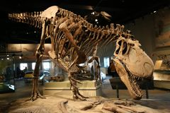 dinosaurs imagens de stock