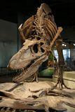 dinosaurs foto de stock