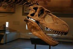 dinosaurs fotos de stock