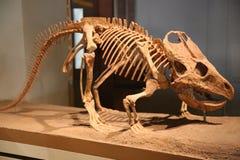 dinosaurs imagem de stock