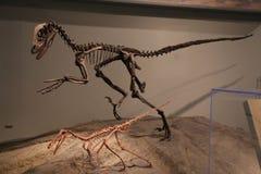 dinosaurs immagini stock